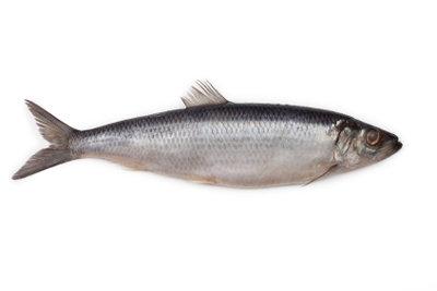 Räuchern Sie Ihren Fisch selber.