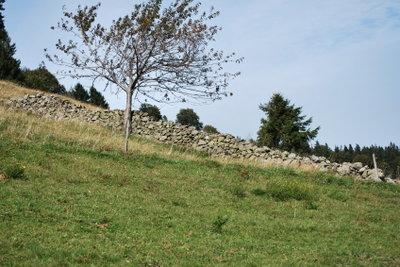 Feldsteine sehen gemauert dekorativ aus.