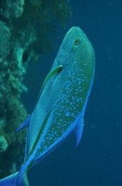 Viel Spaß in der Unterwasserwelt