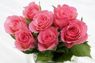 Jede Rosenfarbe hat ihre Bedeutung.