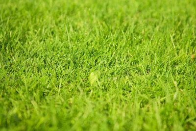 Der Rasen sollte regelmäßig vertikutiert werden.