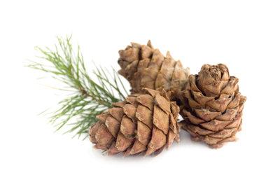 Zedernholz ist hochwertig und duftet köstlich.