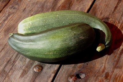 Zucchini schmecken auch roh sehr gut.