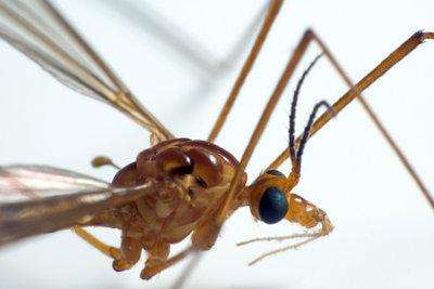 Gegen Mückens gibt es erprobte Hausmittel.