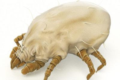 Milben verursachen typischerweise nächtlichen Juckreiz.