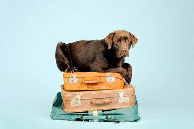 Für reisende Hunde besteht Chippflicht.