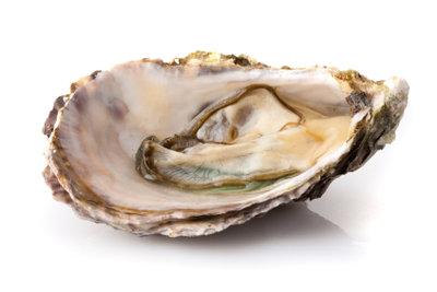 Austern sind eine kostspielige Delikatesse.