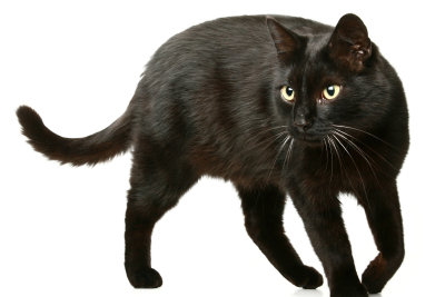 Katzenfell ist weich und glänzend.