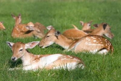 Wild muss geschützt werden.