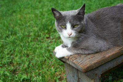 Eine Katze auf der Gartenbank