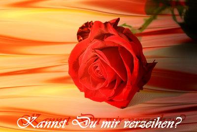 Eine Rose zur Entschuldigung