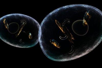 Sichtbare Zellorganellen bei der Zellteilung