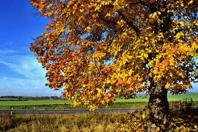 Baumlängen streben einem Sättigungswert entgegen.