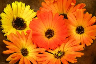 Ein bunter Blumenstrauß wirkt gegen Herbstmüdigkeit.