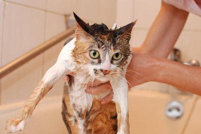 Die Katze nach dem Waschen