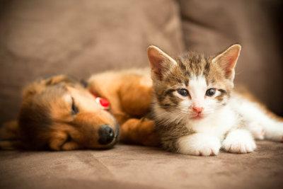 Hund und Katze können Freunde werden.
