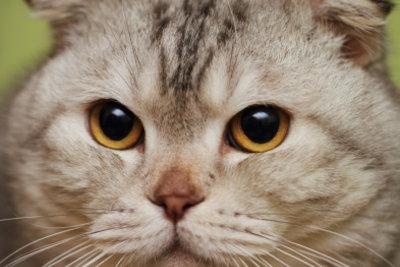 Katzen kommen öfters nicht nach Hause.