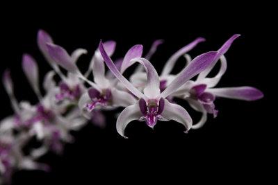 Erdorchideen sind anspruchslos in der Pflege.