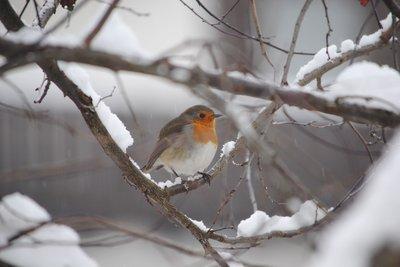 Wildvögel brauchen im Winter menschliche Unterstützung.
