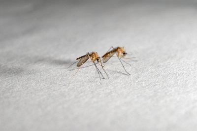 Mücken kann man pflanzlich effektiv vertreiben.