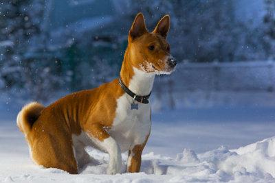 Bei Schnee auch an Hundeschuhe denken!