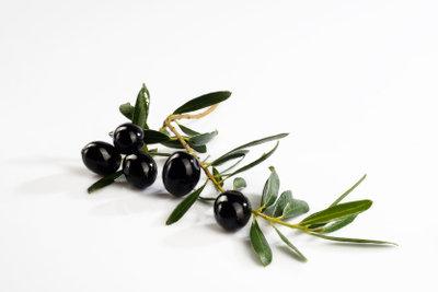 Olivenbäume müssen richtig überwintert werden.