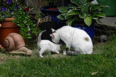 Jung- und Altkatze lernen miteinander auszukommen.
