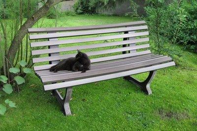 Katzen tollen gerne im Garten herum.