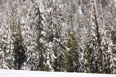 Schneegarantie in den Bergen Vancouvers.