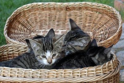 Katzen sind soziale Tiere.