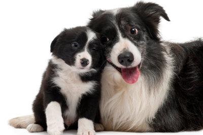 Hundefell ist dicht und glänzend.