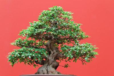 Einen Glücksbaum dekorieren.