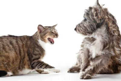 Ein Katzenbiss kann sich entzünden.