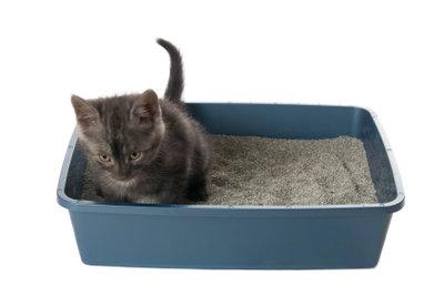 Hygienisches Katzenklo bei Durchfall.