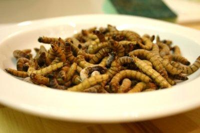 Diese Würmer sind Maden.