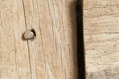 Typische Bohrlöcher bei einem Holzwurmbefall.