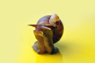 Schnecken sind pflegeleichte Haustiere.