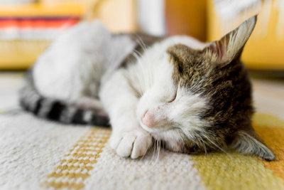 Viel Ruhe für die Katze