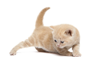 Eine kleine neugierige Katze.