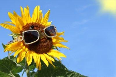 Kratzer auf Sonnenbrillen versperren die Sicht.