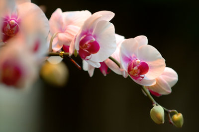 Orchideen gehören auf die Fensterbank.