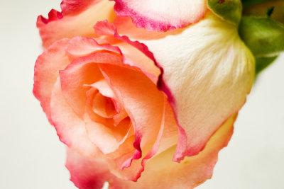 Rosen sind ein Zeichen für Romantik.