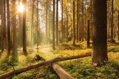 Sonnenenergie für den Stoffkreislauf im Wald