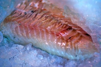 Ein Königskorallenfisch ist etwas ganz Besonderes.