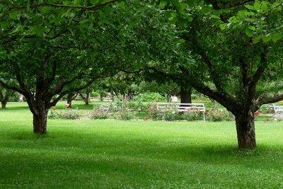 Kahlstellen im Rasen können Sie reparieren.