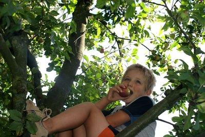 Kinder lernen den Baum besser kennen.