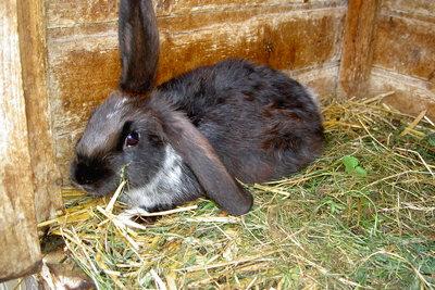 Kaninchen Residenz fürs Wohnzimmer