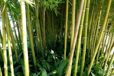 Bambus ist eine sehenswerte Pflanze.