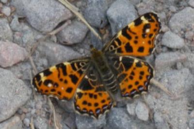 Schmetterling - Totem für das Luft-Element.