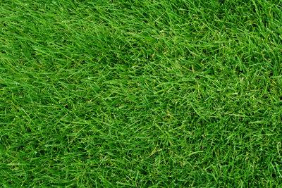 Optimale Pflege verhindert Maden im Rasen.